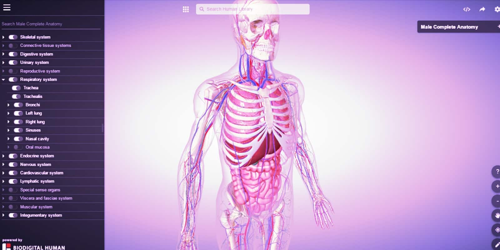 BioDdigital Human - Giza gorputza eta anatomia esploratzeko aplikazioa